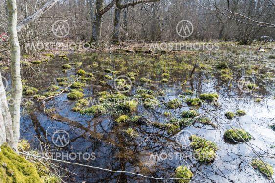 Våtmark i naturreservatet Halltorps Hage på Öland