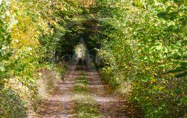 Ljuset i tunneln vid en höstfärgad brukningsväg