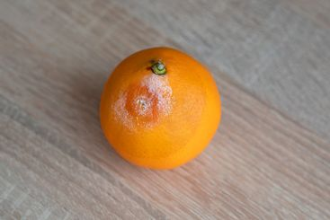 Mouldy rotten orange fruit