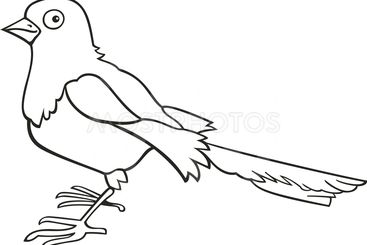 Magpie for coloring book