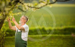 Portrait of senior man gardening, taking care of his...