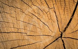 Wood texture background surface. Natural wood texture....