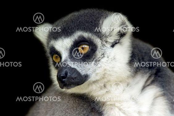 Portrait of a cute monkey