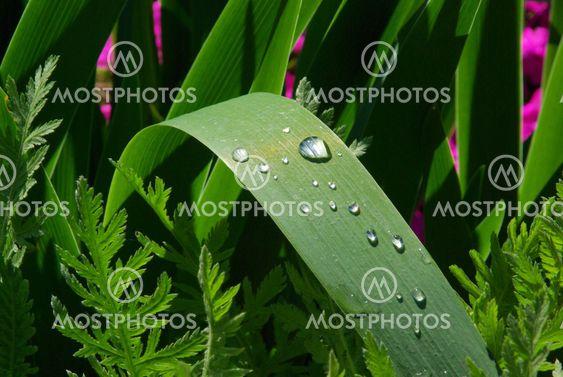 Wassertropfen auf Blatt - waterdrop on leaf 02