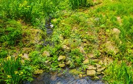 tiny water fall surrounded by rocks and plants in a...