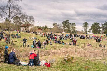 Många människor samlade för kosläpp utanför Uppsala.