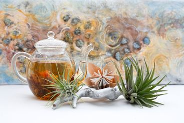 arrangement with airplants
