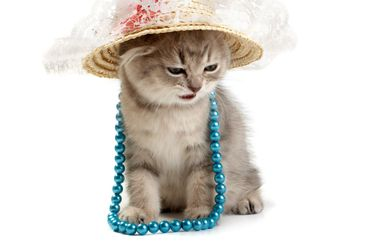 Kitten with a beads and in a hat