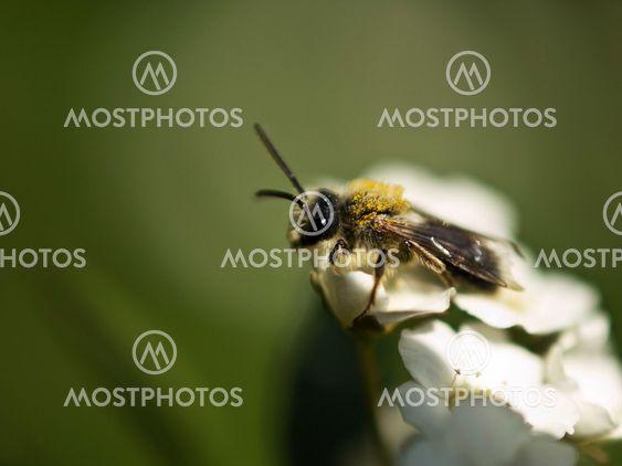 Fly on white flower