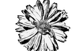 Illustration with a flower