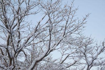 Hoarfrost of trees in winter.