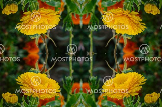 flowers , visual effect of a mirror,abstract color...
