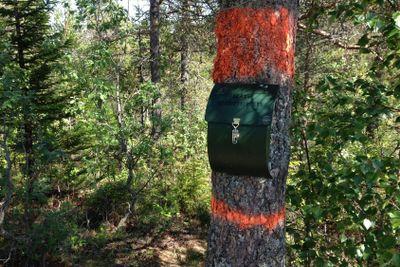 Brevlåda i skogen