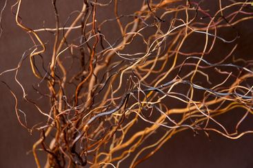 curved twigs