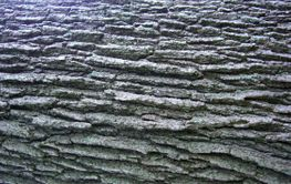 Tree Bark Bacjgroung