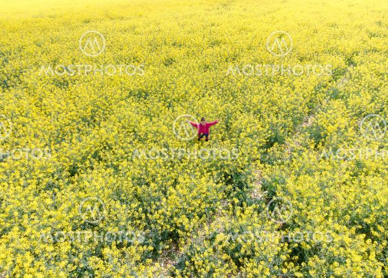 Aerial image taken with drone of a field of rapeseed...