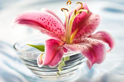 lily, romantic mood