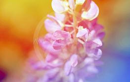 Beautiful wildflowers photographed close up on a...