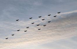 Julgransflygning Julgransformation Flygvapnet Silvertid