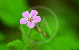 Beautiful color shot of violet small flower in grass....