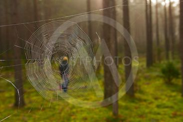 Cobweb in the woods