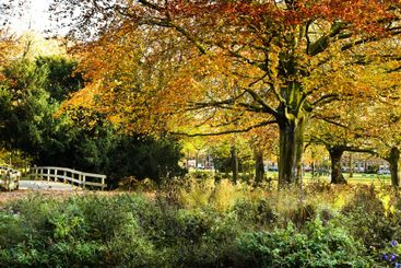 View to entrance of park in autumn