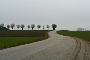 Road to the Spring