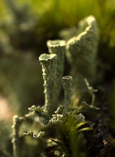 Lichen on Stone IV