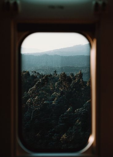 View of the forest from the train window