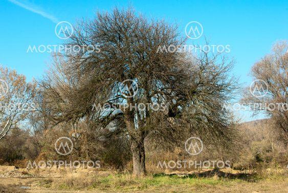 Tree over sky background