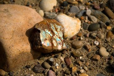 Raw ammolite