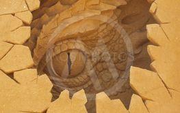 øgle kigger ud af hul i æg