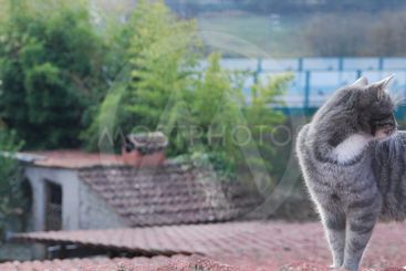 Cat on the roof 5