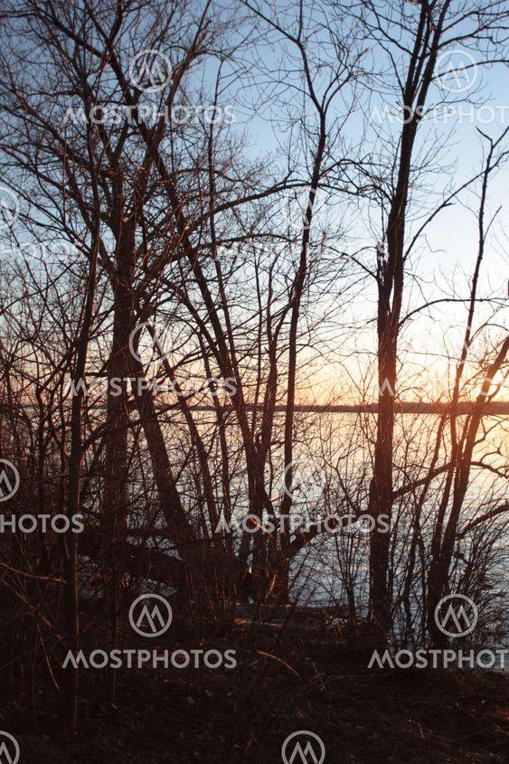 Sun, Ottawafloden och träd