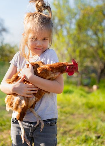 Little child girl is holding the hen on the farm.