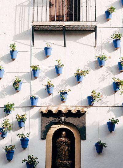 Blue flower pots on the wall. Flowers in pots in sunset...