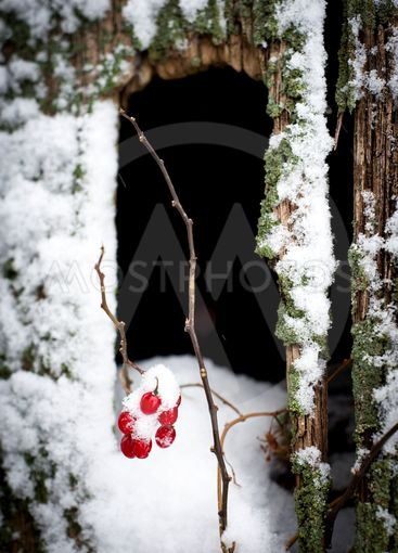 Tiny fruits in the snow