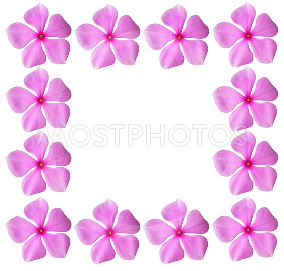 Pink blomster ramme med blanktegn