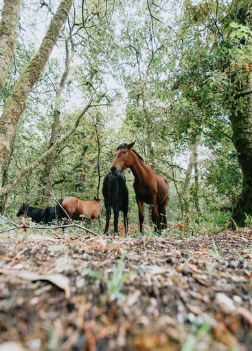Vertical wide angle shot of two wild horses in the...