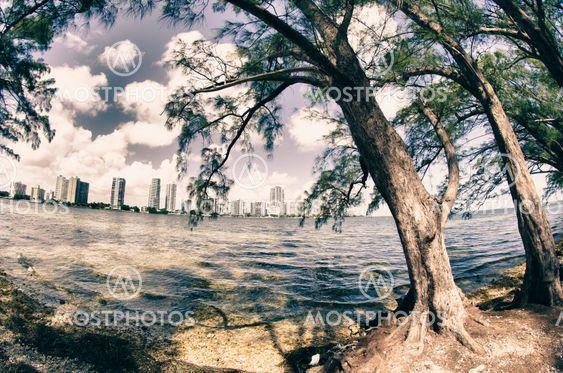 Vegetation of Hobie Island Beach Park in Miami