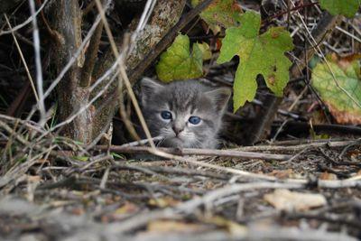 Small grey cat 6