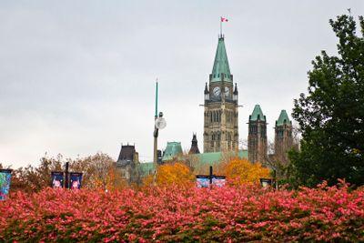 Autumn Towers