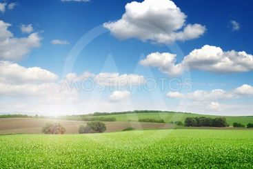 picturesque pea field and blue sky
