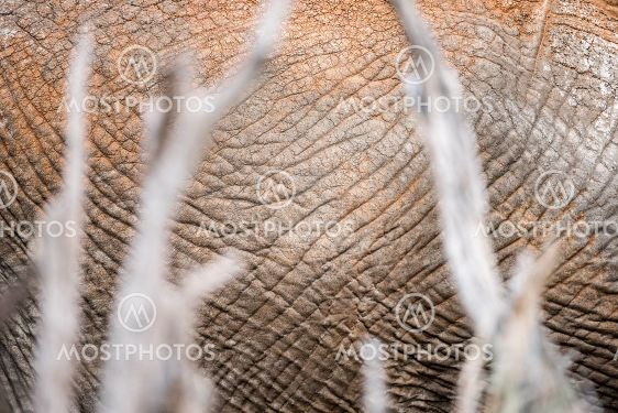 An abstract close up of the body and textured hide of a...