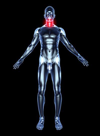 Sore Throat - Anatomy
