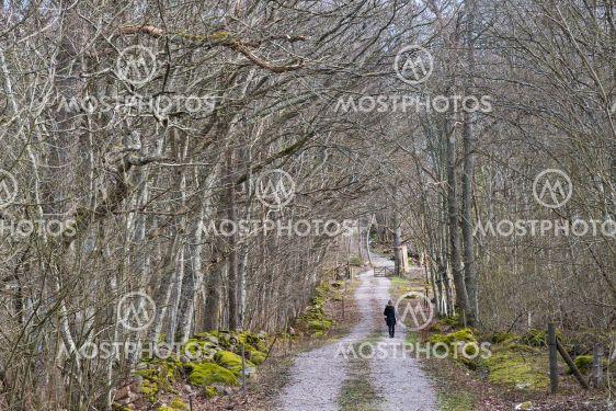 Skogspromenad i Halltorps Hage på Öland