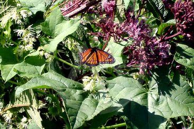 Butterfly on wild Flowers