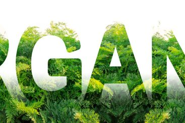 The word Organic on the background of a plantation field...