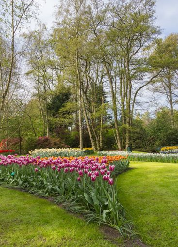 Flowerbed in spring with bulbs