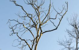 Trädskelett mot en blå himmel